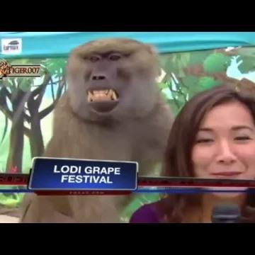 ---اقوى مقاطع فيديو مضحكة مواقف محرجة ومثيرة جدا جديد 2016 - YouTube - Vidéo  dailymotion